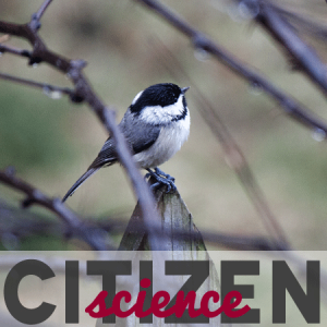 Citizen Science: You be the analyst