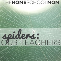 Spiders Are Our Teachers