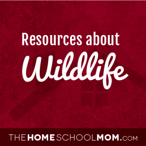 Homeschool resources about wildlife